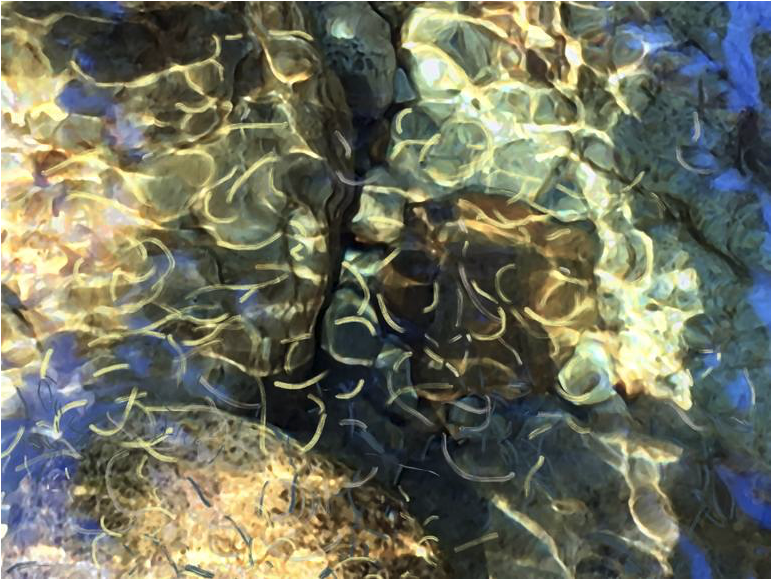 Rocks & Ripples. Art © Linda Naiman 2018